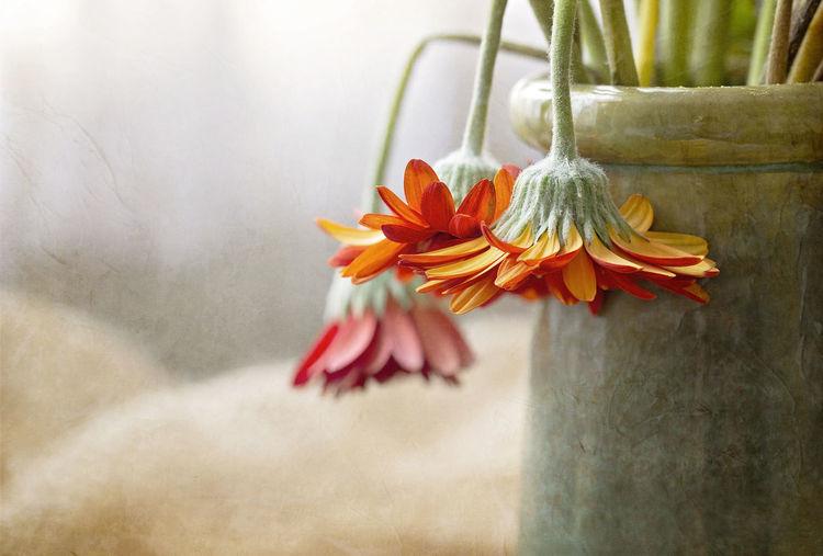 Close-up of orange flower in vase