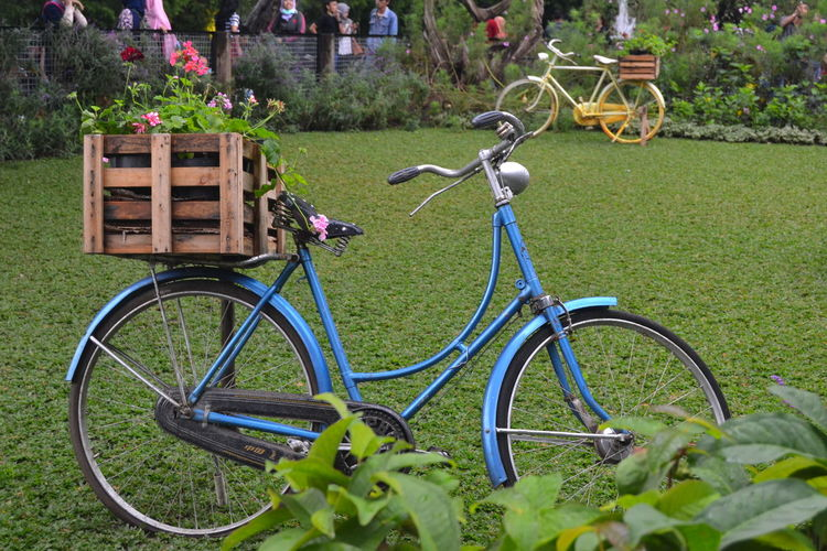 Bicycle parked by plants on field