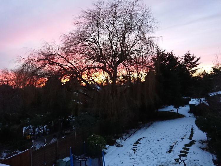 Tree Sky Sunset No People Nature Beauty In Nature Winter Scenics Landscape Outdoors Snow Day Tranquility