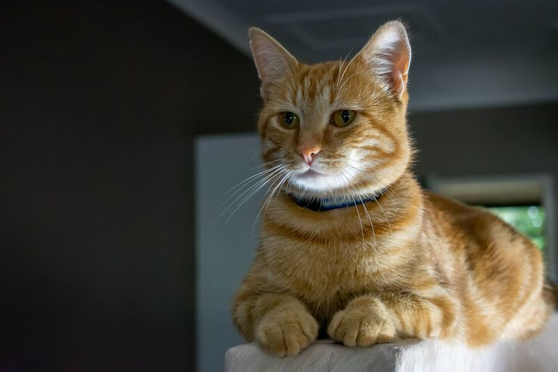 Cat looking away sitting at home