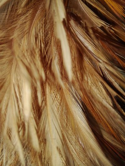 Full frame shot of brown feathers