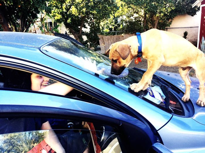 Curiosity Girl And Her Dog Looking Through Window Car Motor Vehicle Transportation Mode Of Transportation Land Vehicle Day Visual Creativity Windshield Pets Real People Dog