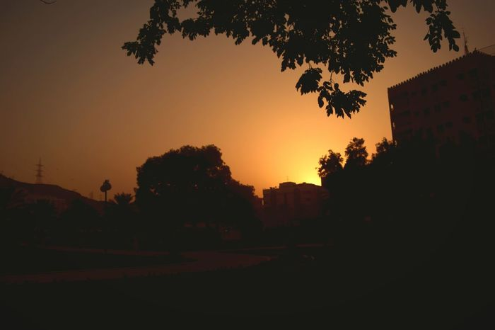 Evening Light Sunset Silhouettes My Country In A Photo Green Nature It's Life Trees Colorsplash
