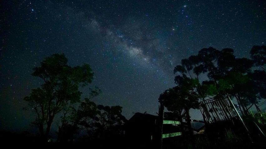 Milky Way Star - Space Astronomy Night Tree Sky Silhouette Milky Way EyeEmNewHere EyeEmNewHere