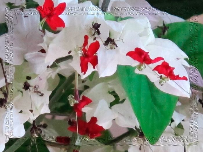 Flower Red Petal Nature Freshness No People Flower Head Full Frame Leaf Fragility Close-up Beauty In Nature Day Indoors