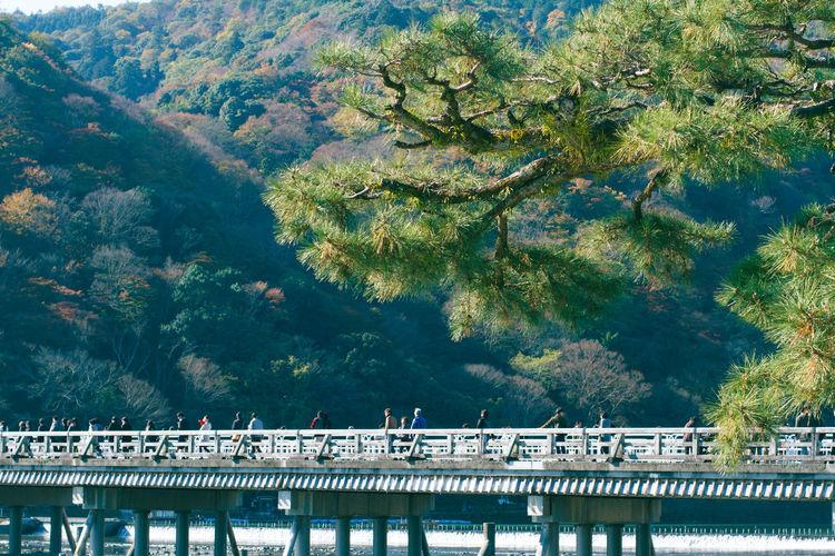 Bridge at arashiyama against tree