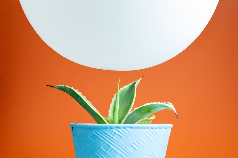 Cactus Flower Pot Green Color Juxtapose  Orange Precarious Balanced Balloon Blue Colored Background Counterpoint Hovering Opposites Pointy Sharp White