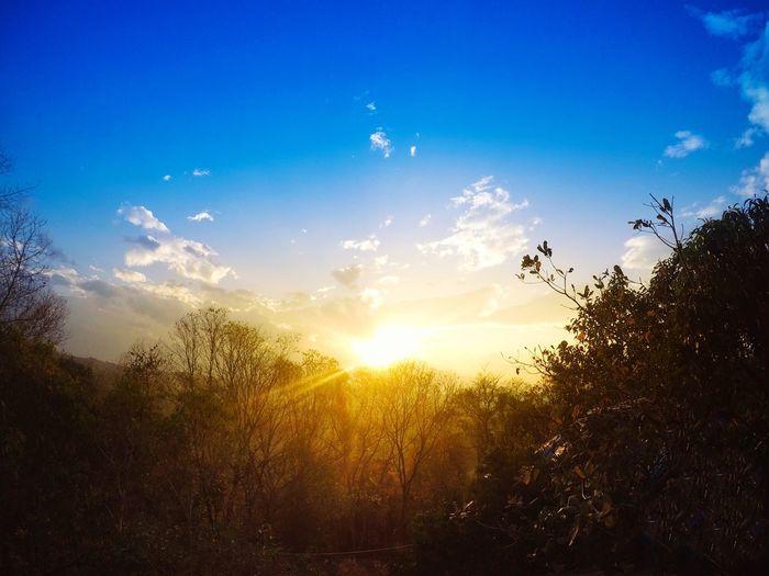 Tree Nature Sun Sky Beauty In Nature Sunlight Scenics Growth Go Pro