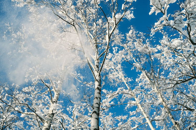 Low angle view of frozen tree against blue sky