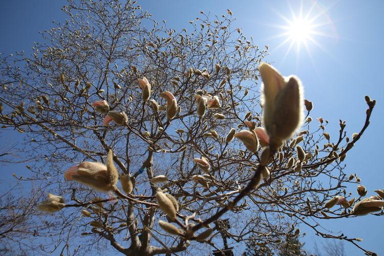 あとちょっと~(o>ω<o) 中華レンズ Wide Macro Bird Bird Of Prey Tree Branch Winter Perching Sunlight Sun Blue Snow