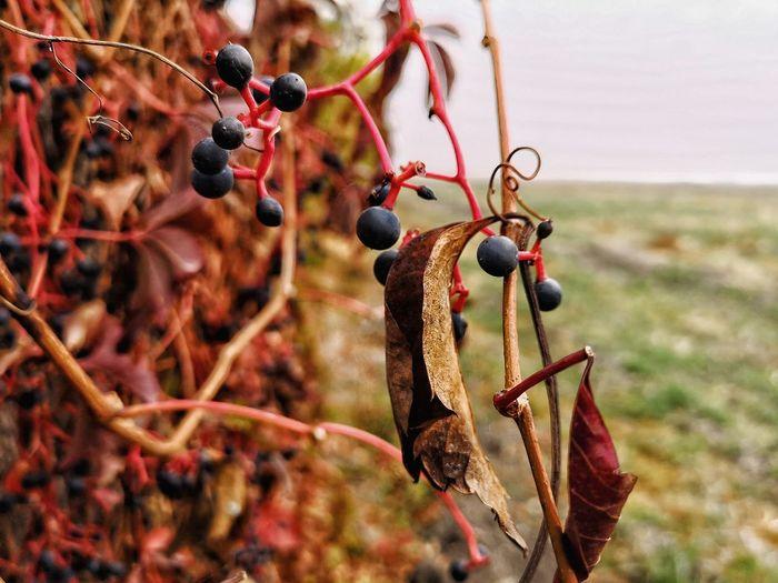 Fruit Hanging