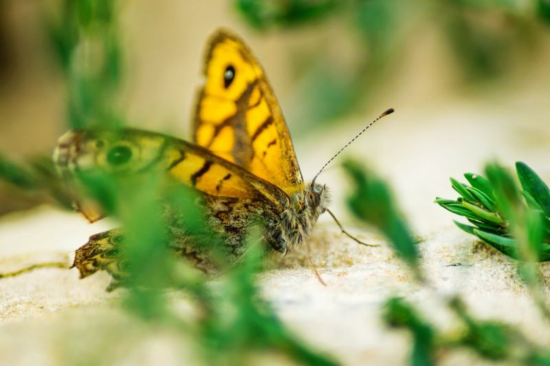 Close-up of butterfly on sand