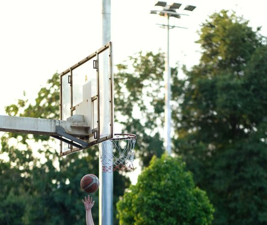 Basketball shooting Basketball Ring Basketball - Sport Basketball Hoop Playing Basketball Plant Tree Low Angle View Nature Day Outdoors No People Basketball Hoop Sky Lighting Equipment Basketball - Sport Built Structure Architecture Focus On Foreground Green Color Street Light Metal Growth Sport Street