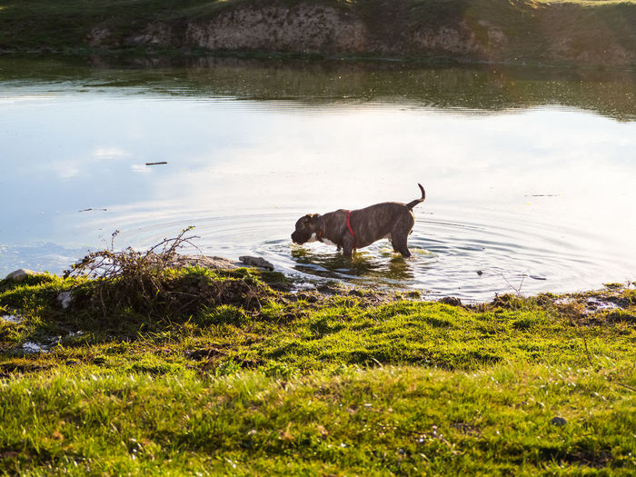 View of a dog in the water