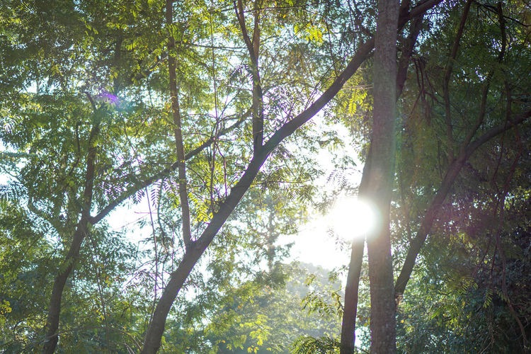Beauty In Nature Branch Day Forest Growth Lens Flare Low Angle View Nature No People Outdoors Scenics Sky Sun Sunbeam Sunlight Tranquil Scene Tranquility Tree Tree Trunk