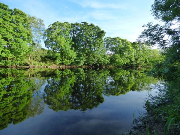 River reflection Water Reflection Tree Lake Nature Outdoors Sky Green Color Cloud - Sky Beauty In Nature Day No People Art Photography Reflection Nature Popular Photos Scenics Low Angle View Photography Beauty In Nature Tree Popular Tranquility