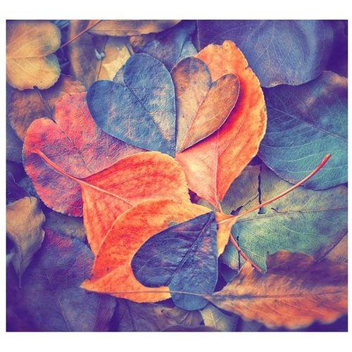 Colours Foglie Fogliesecche Colour Colours Autumn Autumnlife Autumnleaves Nature Naturelovers Naturel Naturelove Life Picture Picoftheday Pic Followforfollow Follow4follow Likeforlike Like4like Follow Followmenow
