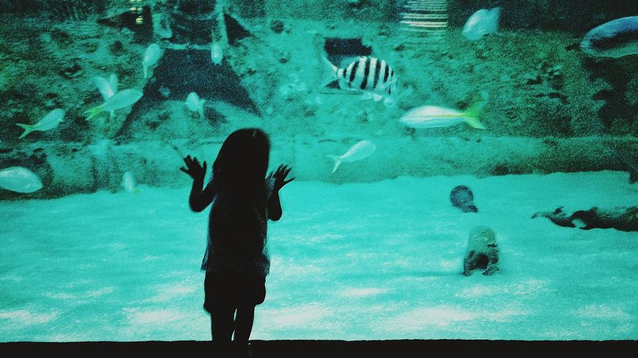 Ella's first trip to the aquarium. Creative Light And Shadow North Carolina Fish Learning Check This Out Nature At The Beach Exploring Taking Photos