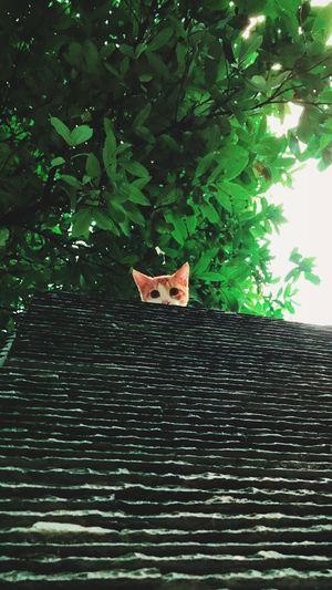 喵~ Cat