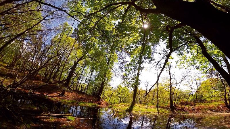 • The Great Outdoors – 2016 EyeEm Awards GoPro nature - Losone, Switzerland
