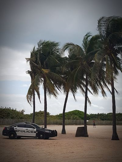Public safety Skyandsand Florida Police Policecar Miami Beach Palm Tree Car
