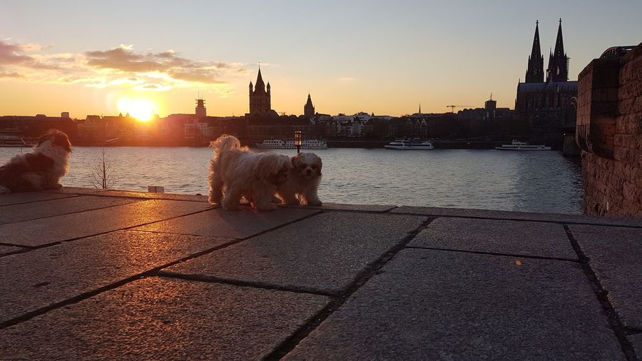 View of dog in city during sunset