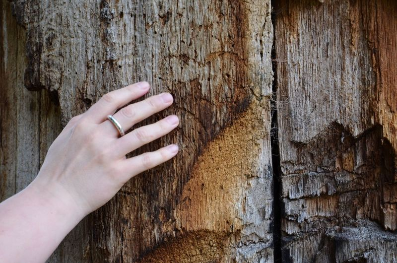Touch Wood Touching In Touch With Nature Touch Wood In Touch Wood - Material Woman Ring Human Hand Human Body Part Human Finger Tree Trunk Wood - Material Close-up Day One Person Outdoors Tree Real People People