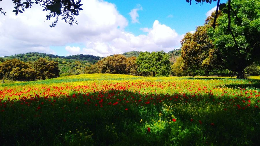 Field with flowers Flower Cloud - Sky Nature Tree Beauty In Nature Plant Field Sky Day No People Landscape Outdoors Flowerbed Multi Colored