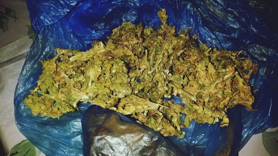 Smokin Marijuana Smokin Dope