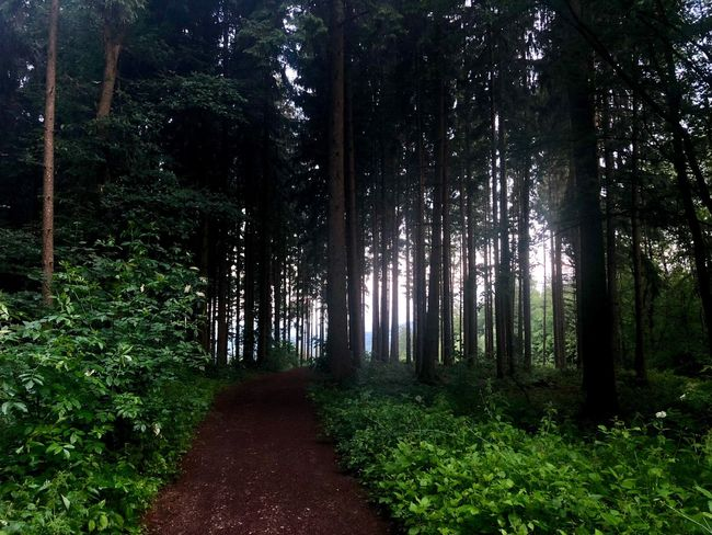 An awesome way to start the day - run in the forest. Tree Plant Land Growth Forest The Way Forward Green Color Beauty In Nature Nature Tranquility Day Outdoors