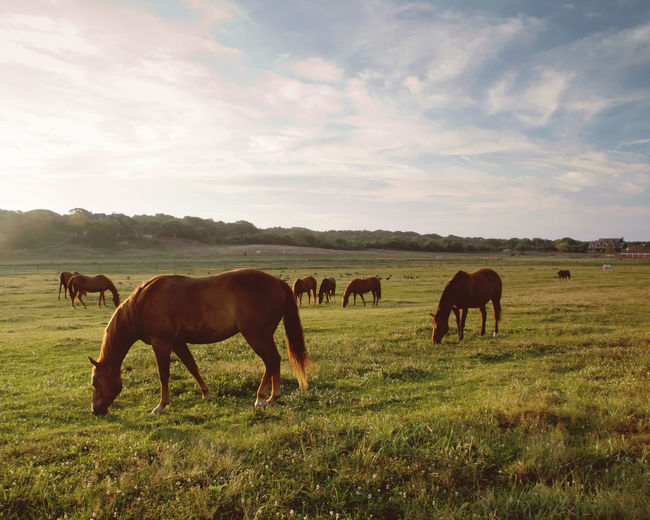 Horses Grazing In Ranch Against Sky