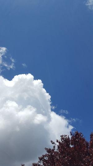 smoke sky Tree