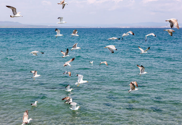 Seagulls Flying Over Sea On Sunny Day Sea Water Bird Animal Themes Vertebrate Animals In The Wild Group Of Animals Large Group Of Animals Animal Animal Wildlife Flying Seagull Flock Of Birds Sky Beauty In Nature Day Waterfront Nature Swimming Horizon Over Water No People Marine
