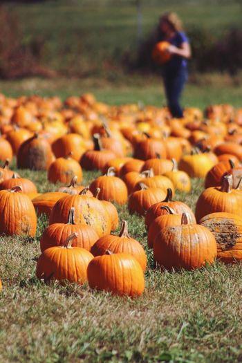 Pumpkinpicking Patch Pumpkin EyeEm Selects Pumpkin Field Day Autumn Grass Outdoors