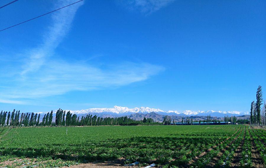 我的家在新疆 Blue Sky Grass Field Cultivated Land Bale