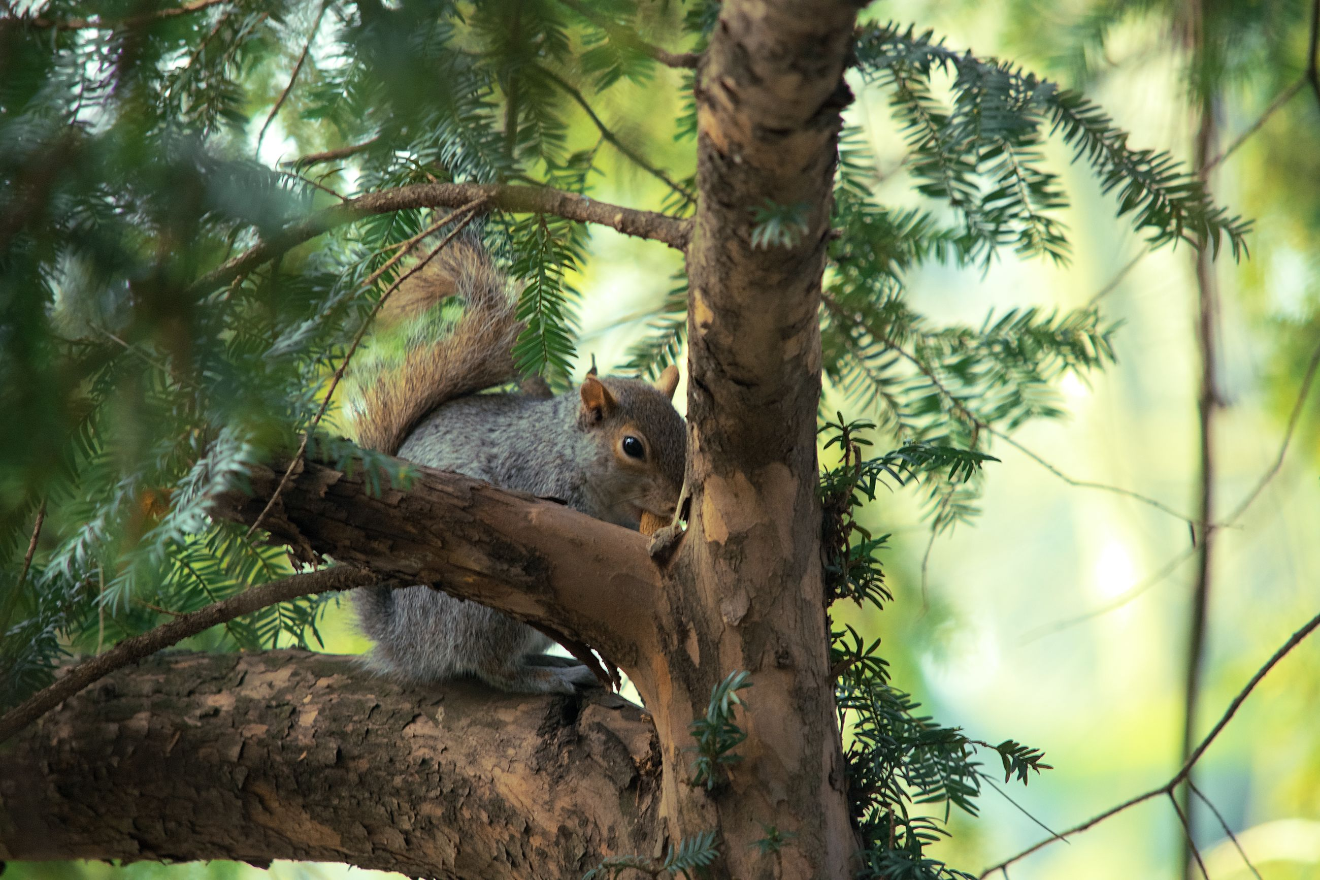 animal, animal themes, tree, animal wildlife, one animal, animals in the wild, plant, mammal, rodent, vertebrate, branch, squirrel, trunk, tree trunk, no people, nature, day, focus on foreground, outdoors, growth, herbivorous