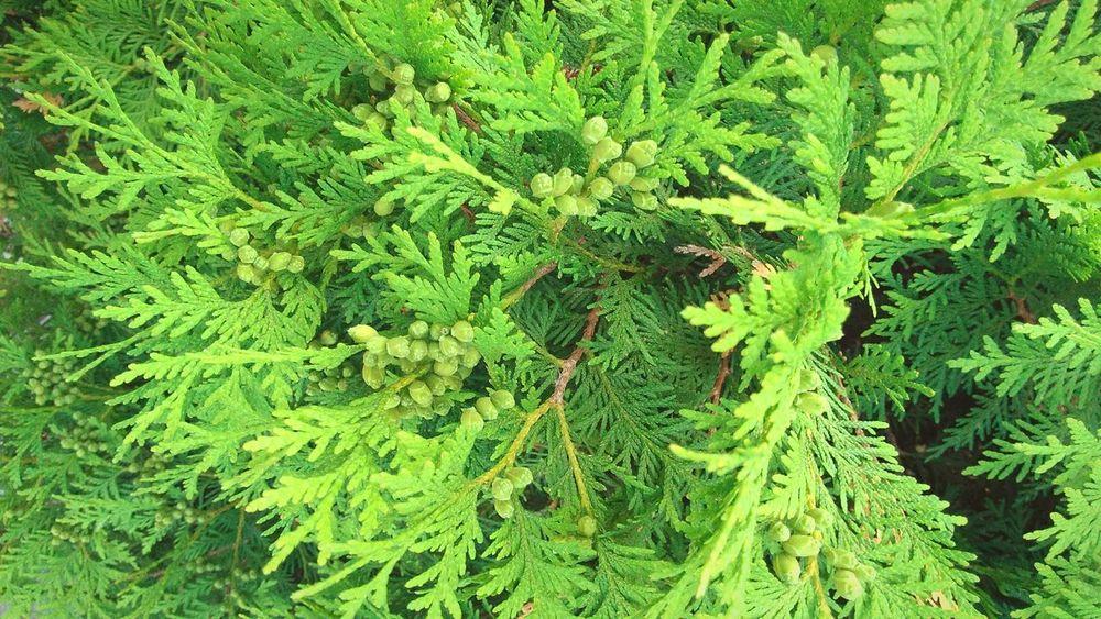 ×וIf a tree dies,plant another one in its place×ו Green Color Growth Plant
