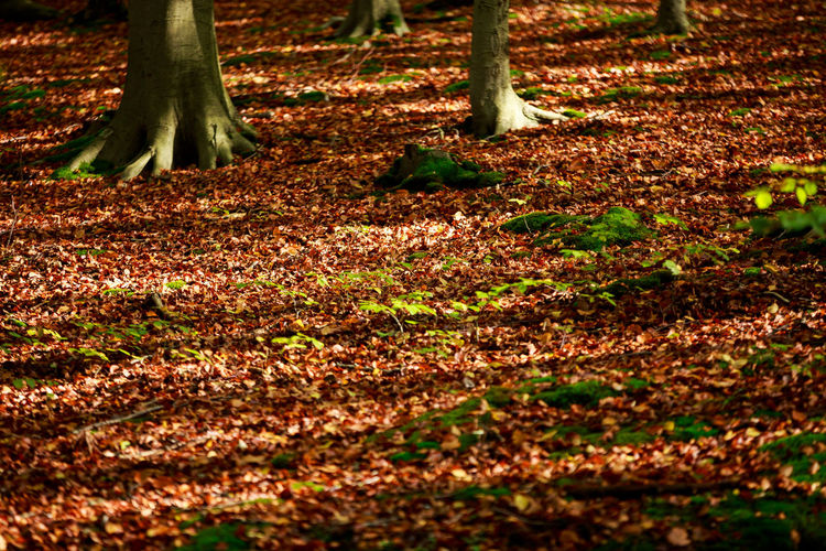 Trees growing on field during autumn
