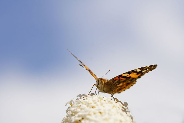 Close-up of butterfly on leaf against sky