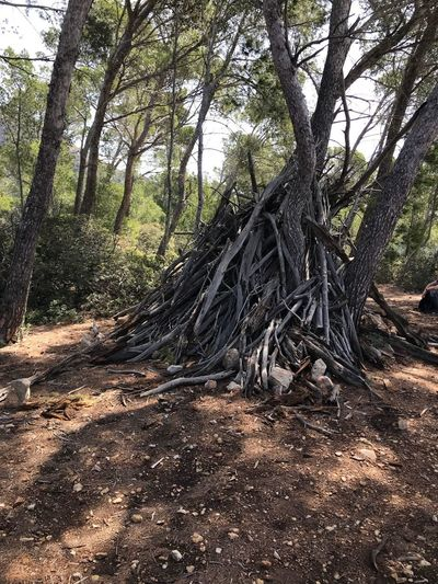 Tipi Tree Plant Land Nature Forest Growth No People Beauty In Nature WoodLand Branch Tranquil Scene Non-urban Scene Outdoors Tree Trunk Trunk