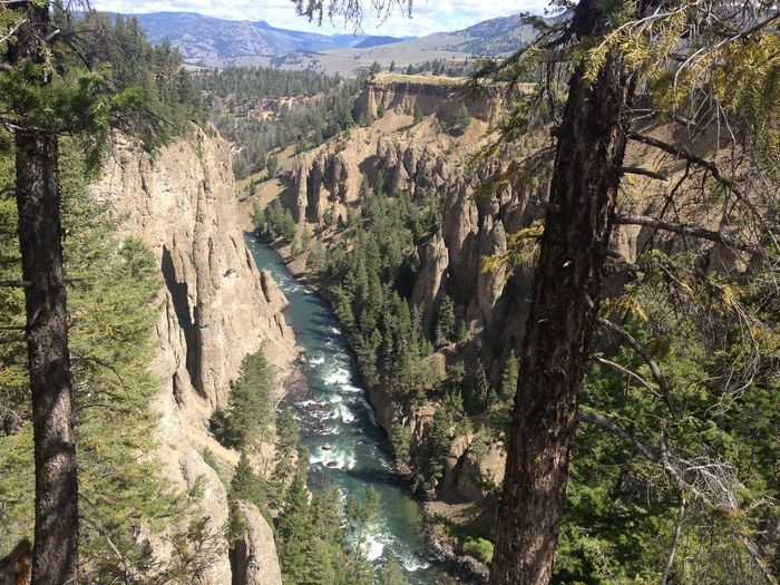 Montana Yellowstone National Park Little Grand Canyon Beauty In Nature Nature Heaven On Earth World Wonders
