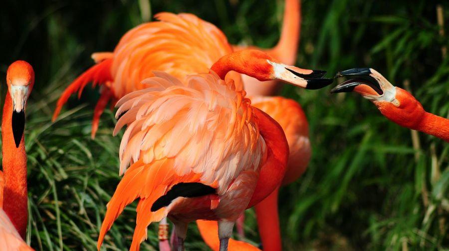 Animals Zoo Animals  Flamingos