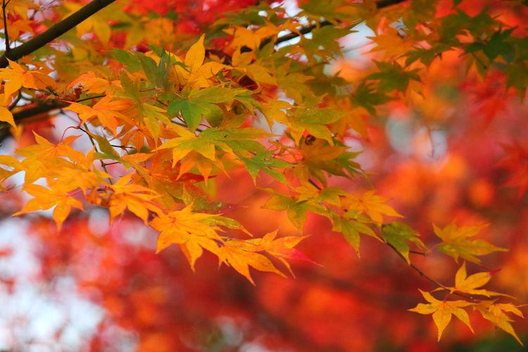 「用作公園の紅葉」(*^^)/