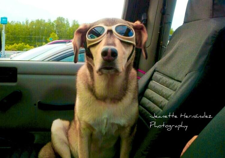 Wal-Mart Dog Myfamilyhunt Mypet @myfamilyhunt