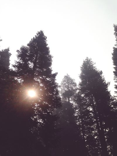 Dawn Morning Daybreak Mountains Tree Plant Sky Nature Low Angle View Growth Sunlight Day Clear Sky Outdoors Beauty In Nature Tranquility Silhouette Tranquil Scene Lens Flare Scenics - Nature