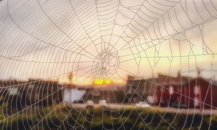 A beautiful sunrise viewed through the creation of an architectural genius. 🌅 🕷 🕸 Spider Web Spider Sunrise Morning Focus On Foreground Architecture Outdoors No People Nature Glorious Tranquil Scene Calm Tranquility Beauty In Nature Dew Drops The Week On EyeEm Taking Photos Scenics Sun Morning Light Dawn