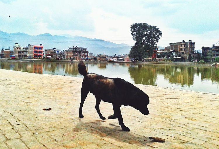 Here Belongs To Me Streetphotography Streetsofnepal EyeEm Best Shots Nepal Urbancity EyeEm Animal Lover Eyeem Market Clouds Nature Landscape Kamalbinayak Mobilography