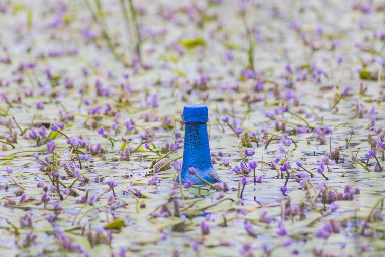 A blue bottle