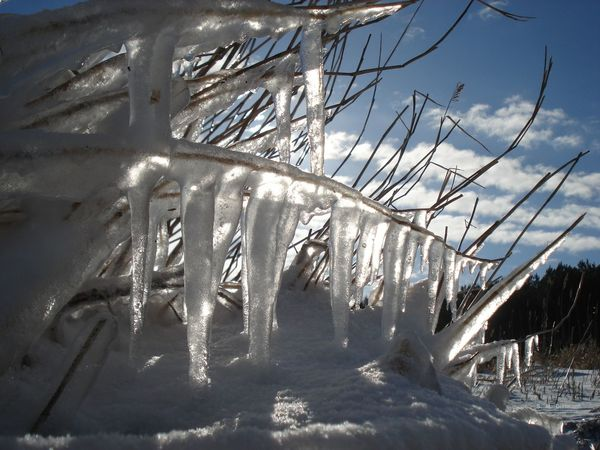 Eis An Der Ostsee Eiszapfen Eiszapfen Am Reed Ice On The Beach Beauty In Nature Cold Cold Temperature Frozen Ice Icicle Nature No People Outdoors Snow Winter