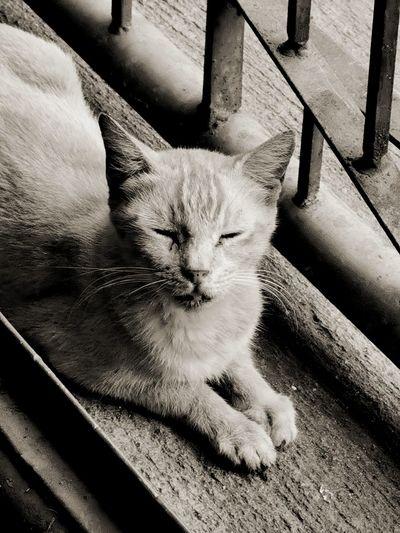 Asleep Pets
